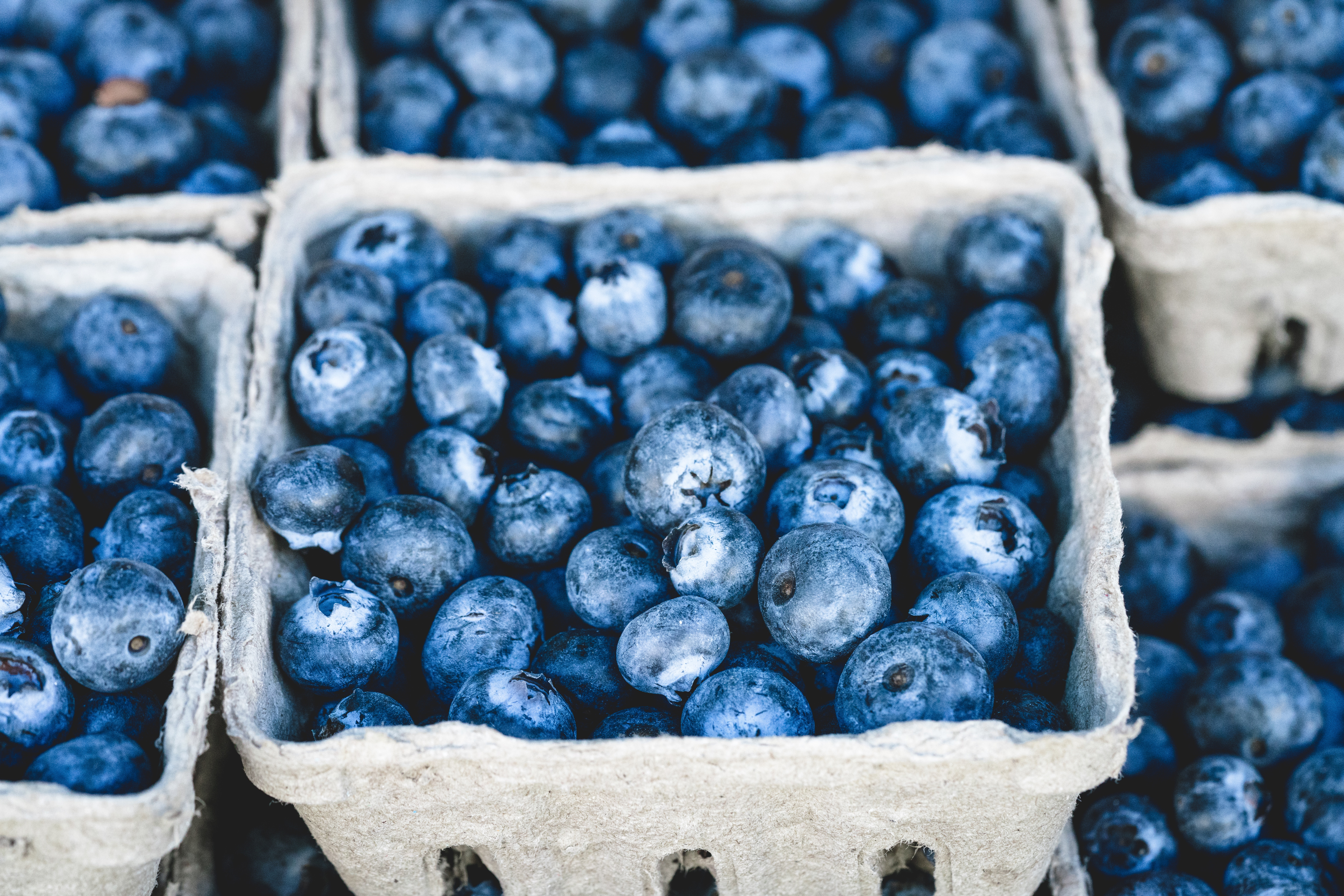 Global Blueberry Market Overview