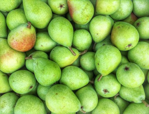 Stemilt Will No Longer Use Anti-Ripening Agents on Its Pears